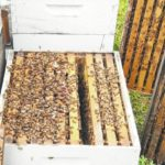 Looking for answers to loss of bees in the hives
